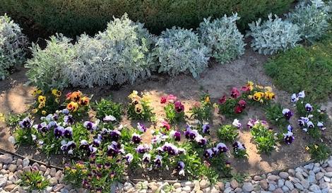 landscape flowers