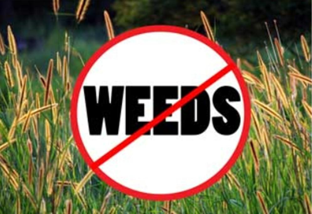 No Weeds